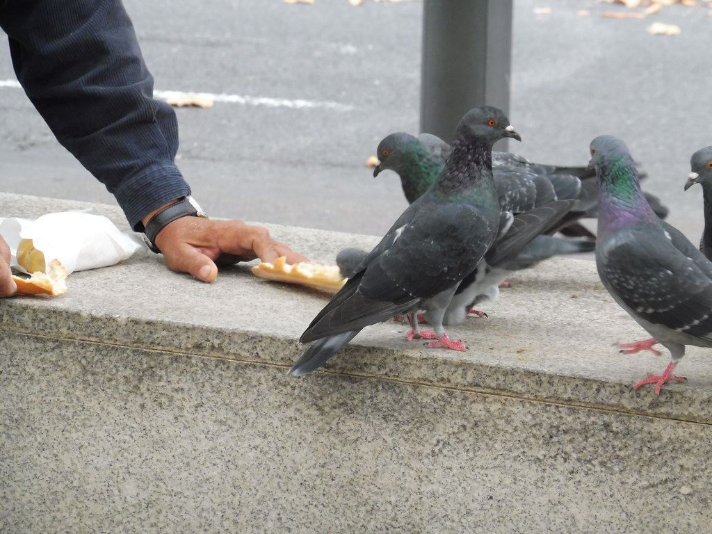 Image result for birds on the street