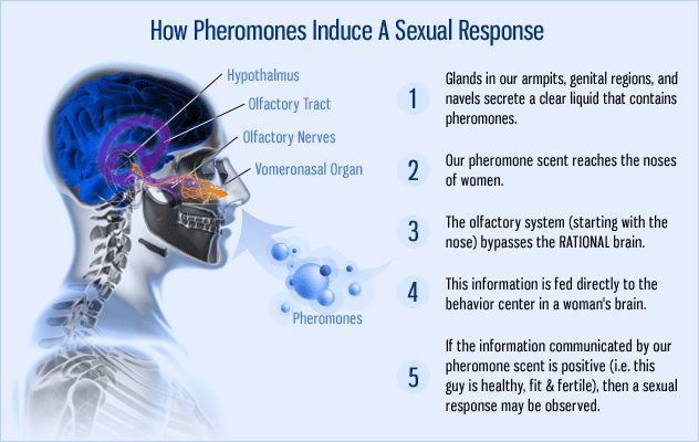 The History of Pheromones | male virginity
